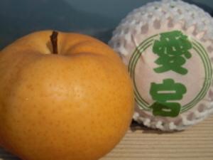 愛宕梨セット 約3.0kg