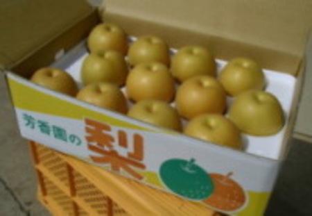 豊水梨 特秀 5.0kg