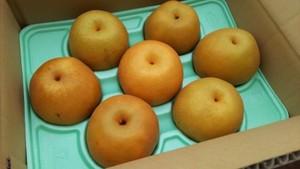 豊水梨 優 3.0kg